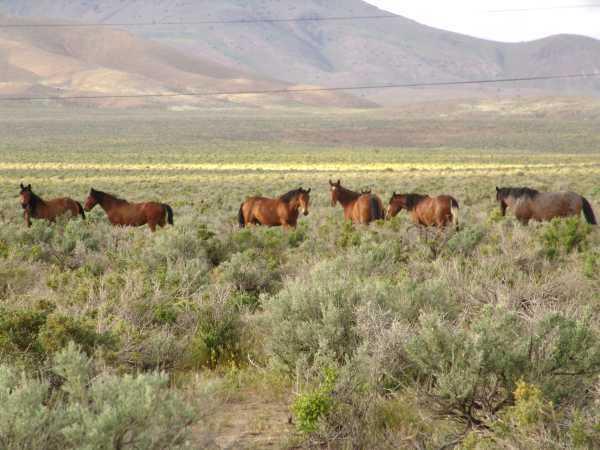 Wild Horses on the Range, P.2